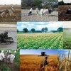 شانه خالی کردن بیمه محصولات کشاورزی از پرداخت غرامت ها/بی اعتمادی مردم به بیمه کشاورزی